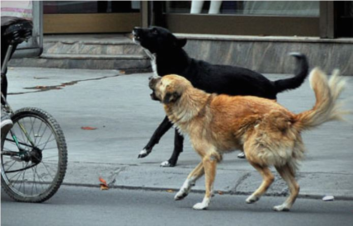 A man and a woman attacked by wild dogs in Skopje