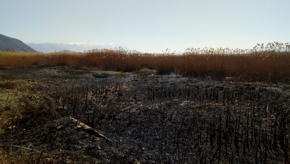 Another large fire near lake Struga, was likely planted