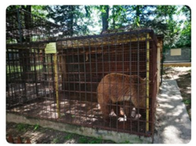 Visitors to the Stip Zoo shocked by poor living conditions for the animals