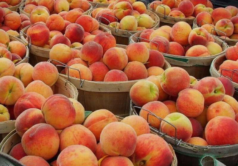 Russia lifts its ban on the import of peaches and other fruits from Macedonia