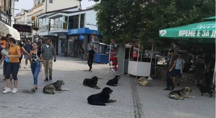 Street dogs harass tourists and locals in Ohrid