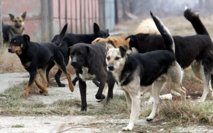 Man arrested after shooting at stray dogs in Aerodrom
