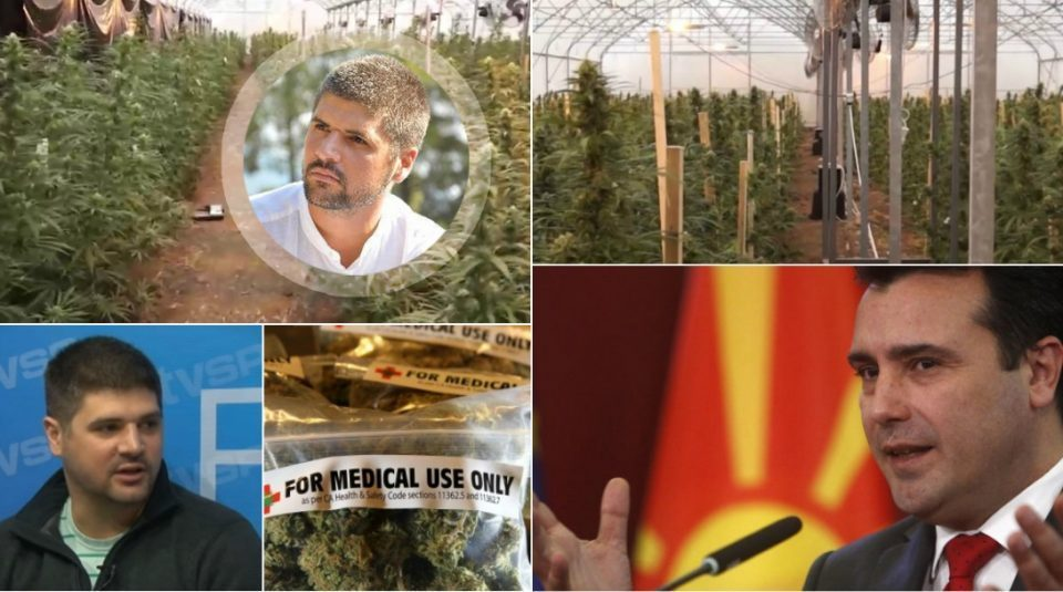 Zaev's marijuana business comes under scrutiny from the public, but not the investigators