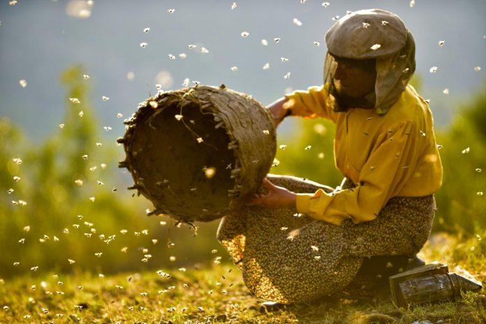 Honeyland nominated for two Oscars