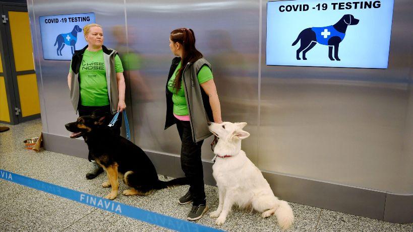 Sniffer dogs used to detect coronavirus win Finnish 'hero dog' award