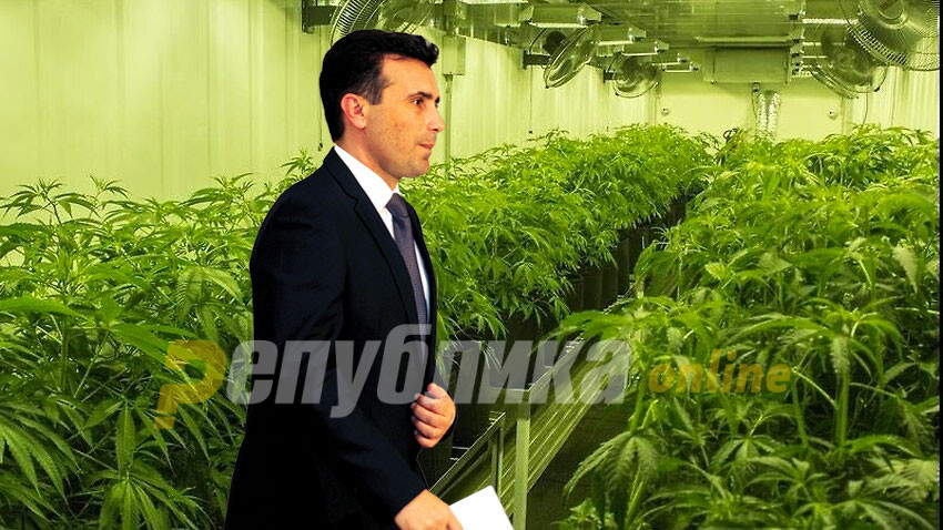 Zaev expects revenue of 250 million euros from cannabis next year