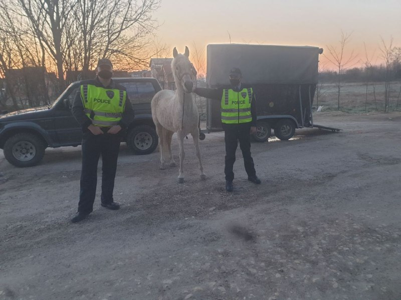 Police retrieves valuable horse stolen from a stable near Skopje