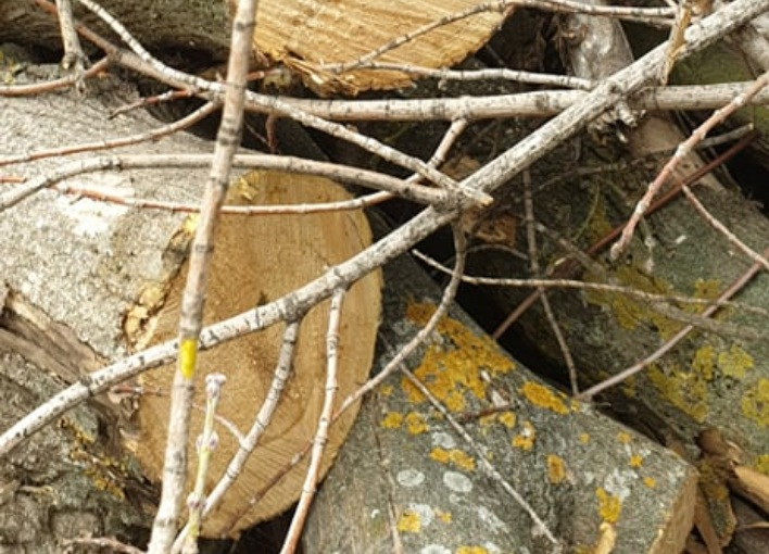 One local and three Albanian citizens arrested for illegal logging near Struga